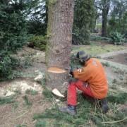 Hoveniers boom om zagen