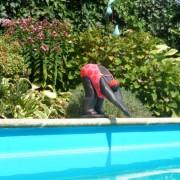 Kunst Tuin onderhoud