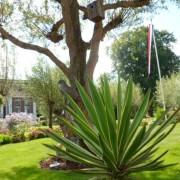 Hoveniers Tuin onderhoud