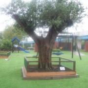 boom planten hovenier